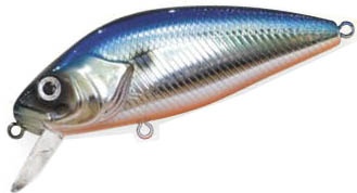 PERCH 672 blue shad
